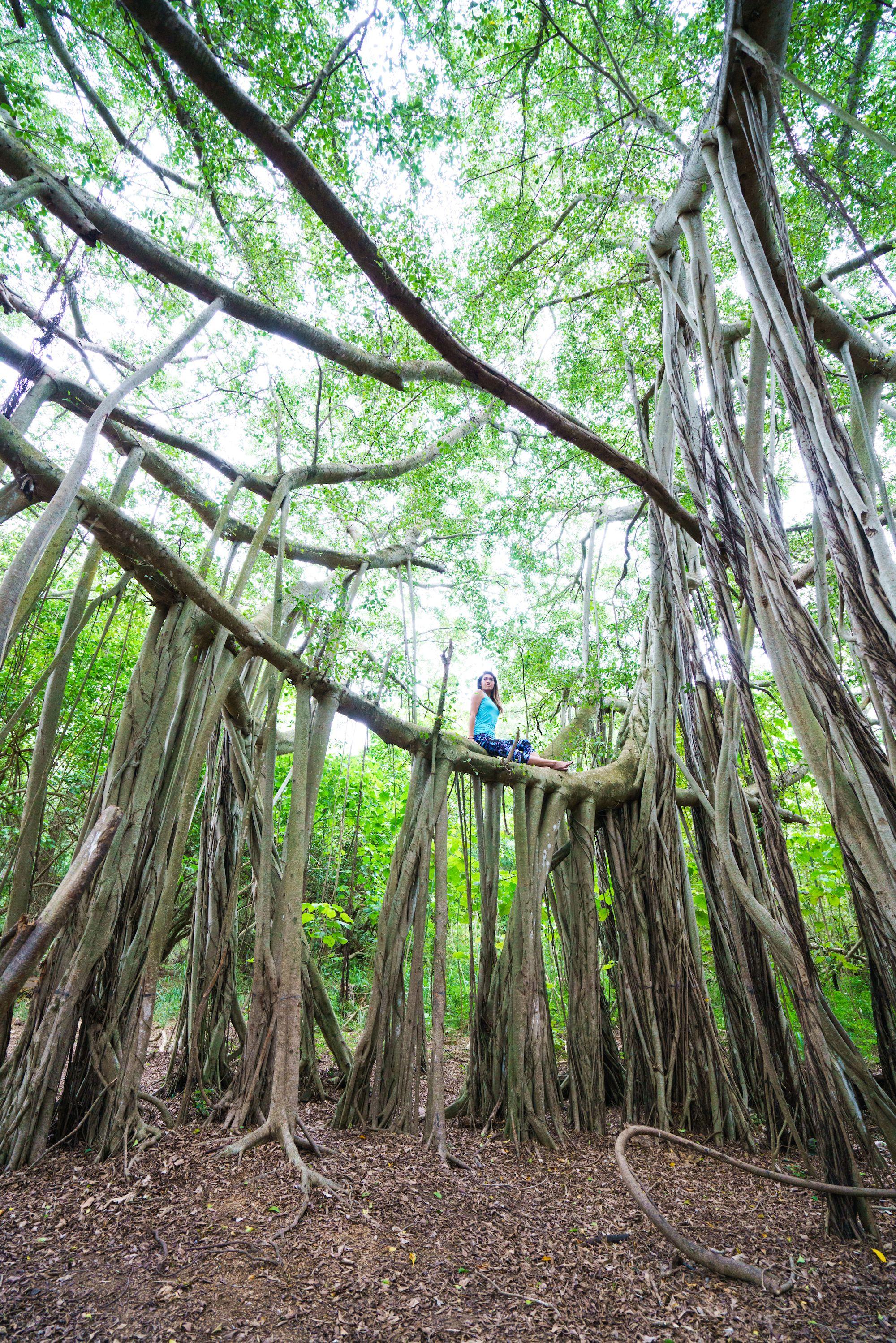 自然と部屋がシンクロ ヨガ レイハワイ