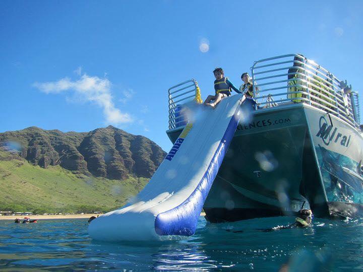イルカ大学 ハワイ