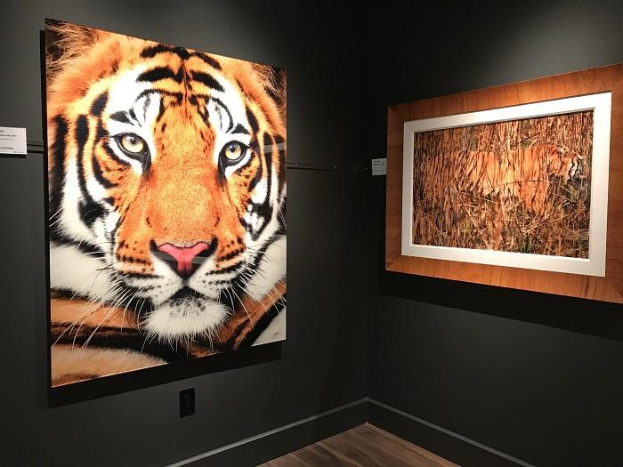 ナショナル・ジオグラフィック・ファインアート・ギャラリー ハワイ