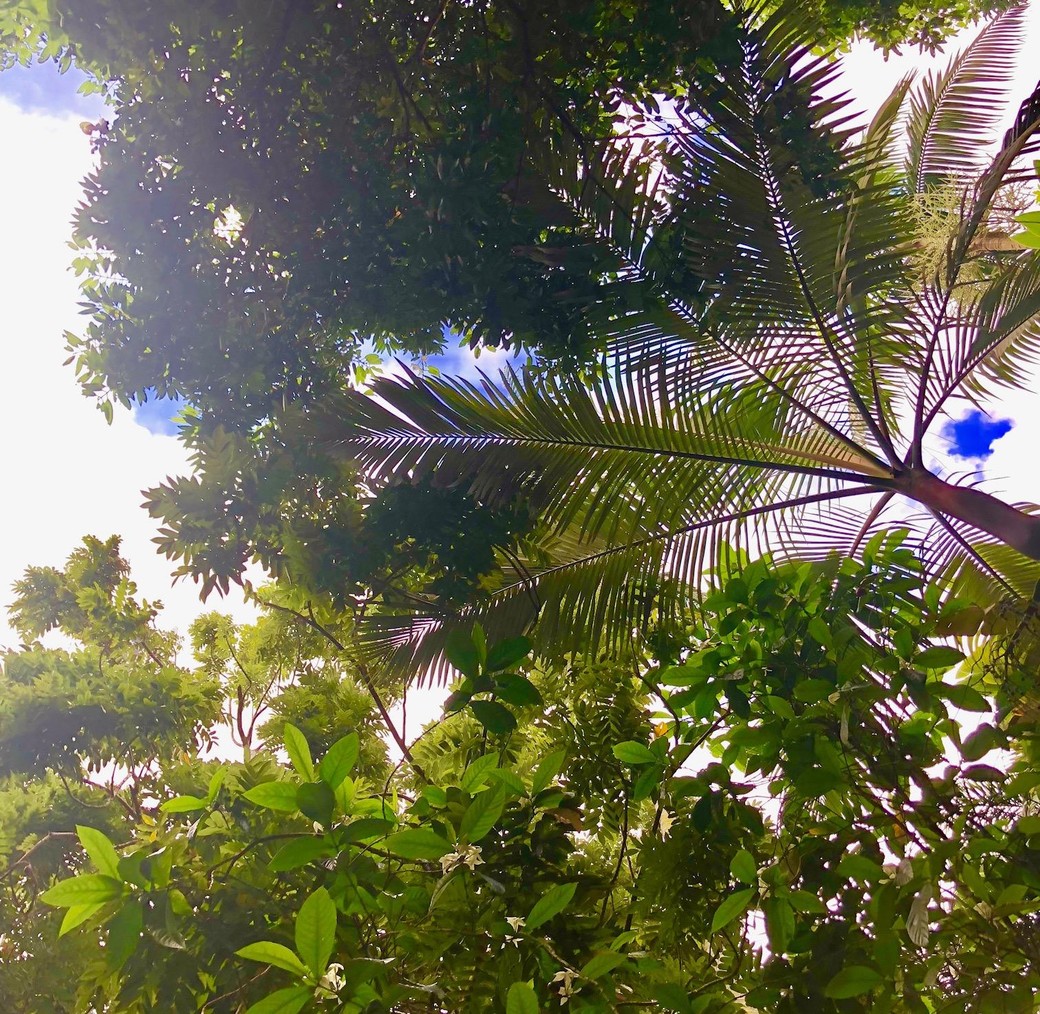 ハワイ植物園