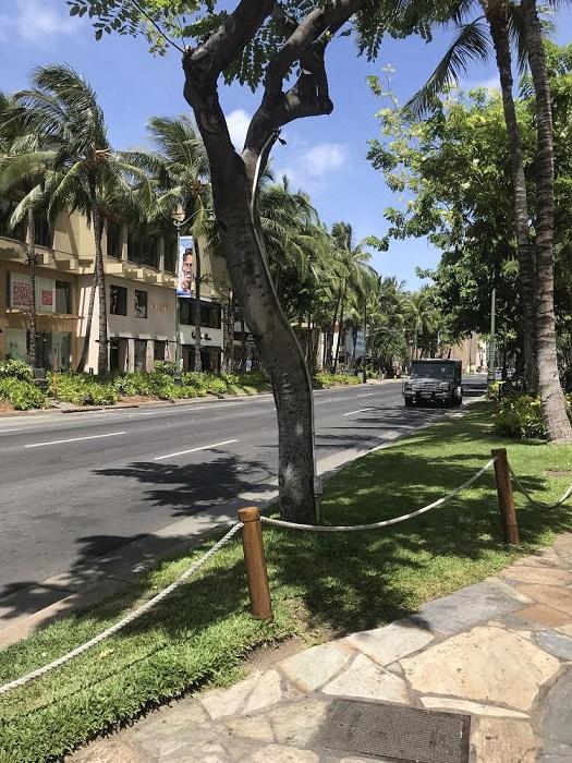 ハリケーン レーン ハワイ