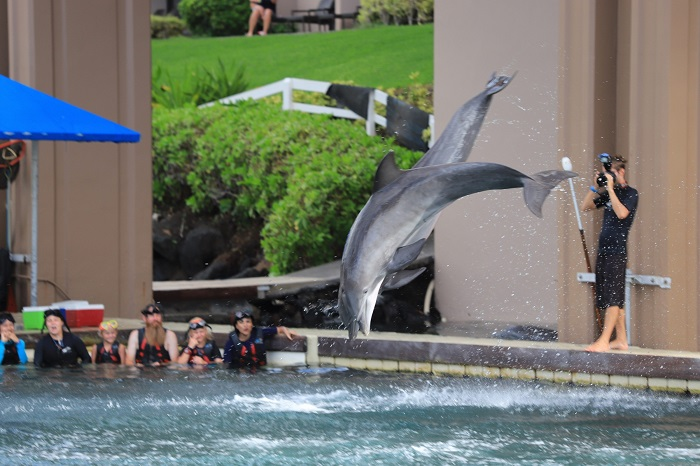 いるか ドルフィンクエスト ハワイ島 ヒルトンワイコロアビレッジ