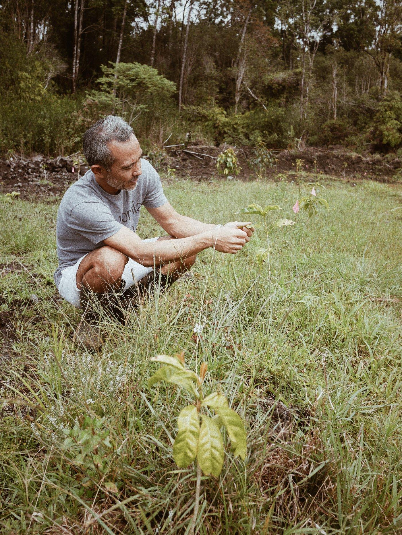 コペラニパラダイス農園 レイハワイ