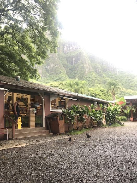 トロピカルファーム ハワイ