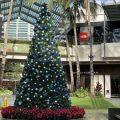クリスマス アラモアナ ハワイ