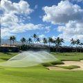 アリーハウス ハワイ ゴルフ